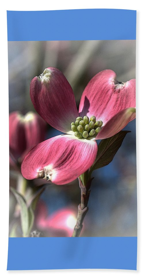 Flower Beach Towel featuring the photograph Red Dogwood by Linda Clifford