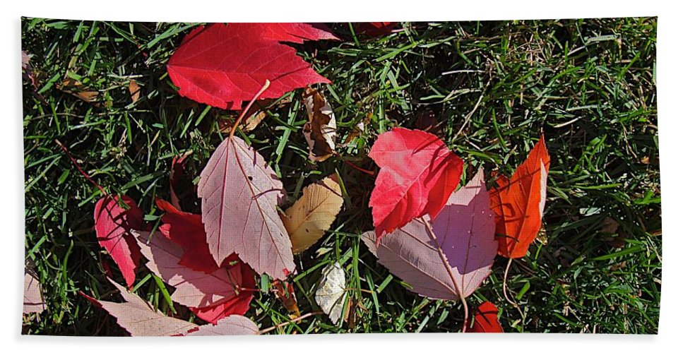 Fall Leaves Beach Towel featuring the photograph Red Fall by Joseph Yarbrough