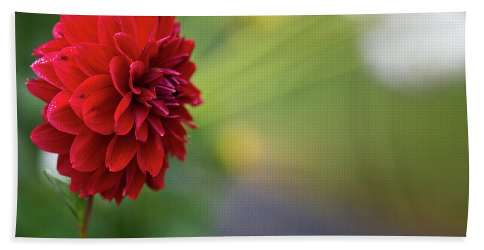 Blooms Beach Towel featuring the photograph Red Flower by Greg Nyquist