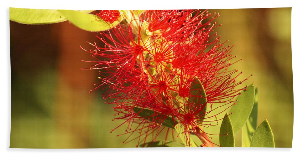 Roena King Beach Towel featuring the photograph Red Flower by Roena King