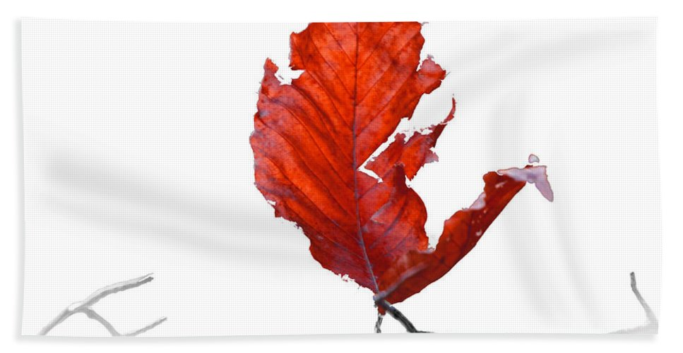 Art Beach Towel featuring the photograph Red Leaf Of Autumn On White by Randall Nyhof