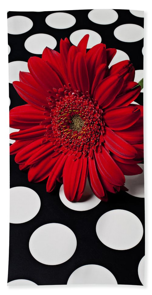 Red Beach Towel featuring the photograph Red Mum With White Spots by Garry Gay