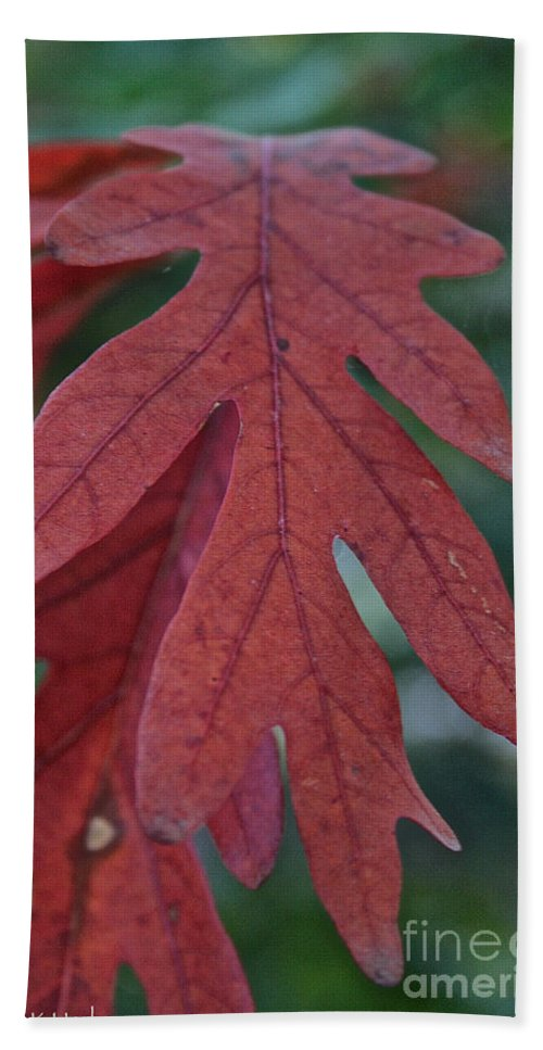 Outdoors Beach Towel featuring the photograph Red Oak Leaf by Susan Herber