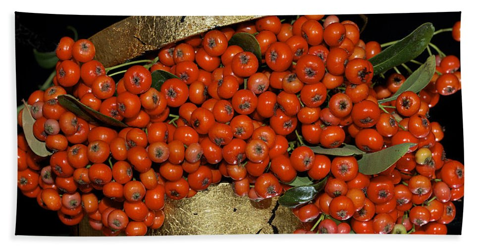 Pyracantha. Berries Beach Towel featuring the photograph Red Pyracantha Berries by Phyllis Denton