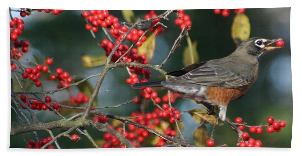 Birds Beach Towel featuring the photograph Red Robin by Living Color Photography Lorraine Lynch