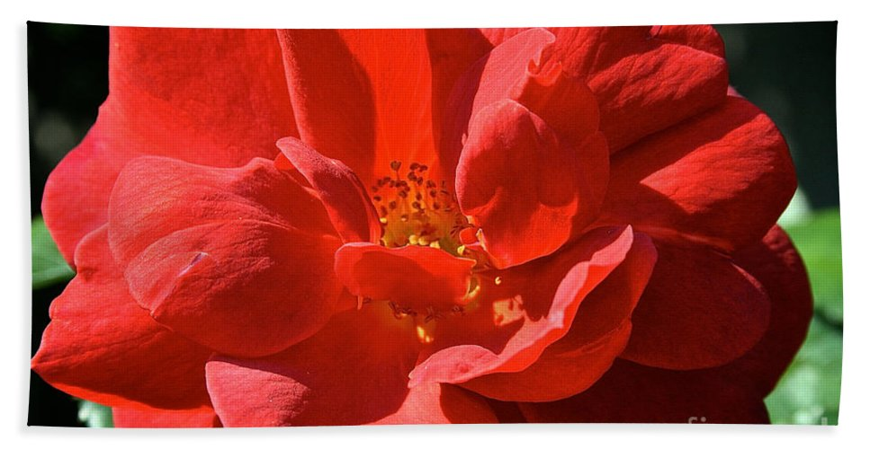Outdoors Beach Towel featuring the photograph Red Rose Summer by Susan Herber