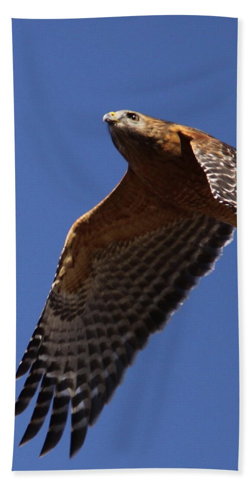 Red Shouldered Hawk Beach Towel featuring the photograph Red-shouldered Hawk - Apache by Travis Truelove