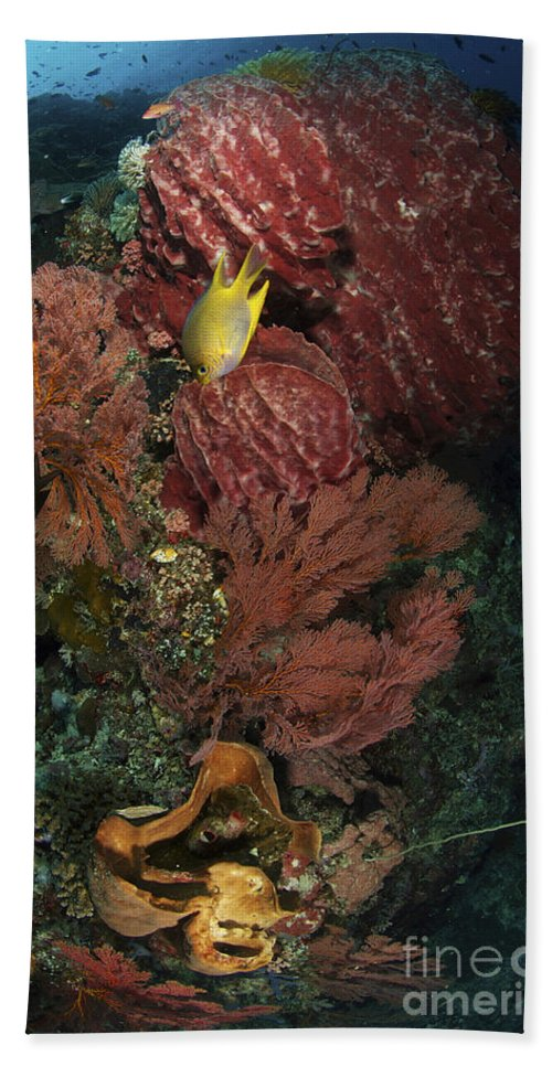Sponge Beach Towel featuring the photograph Reef Sponge Coral And Yellow Fish by Mathieu Meur