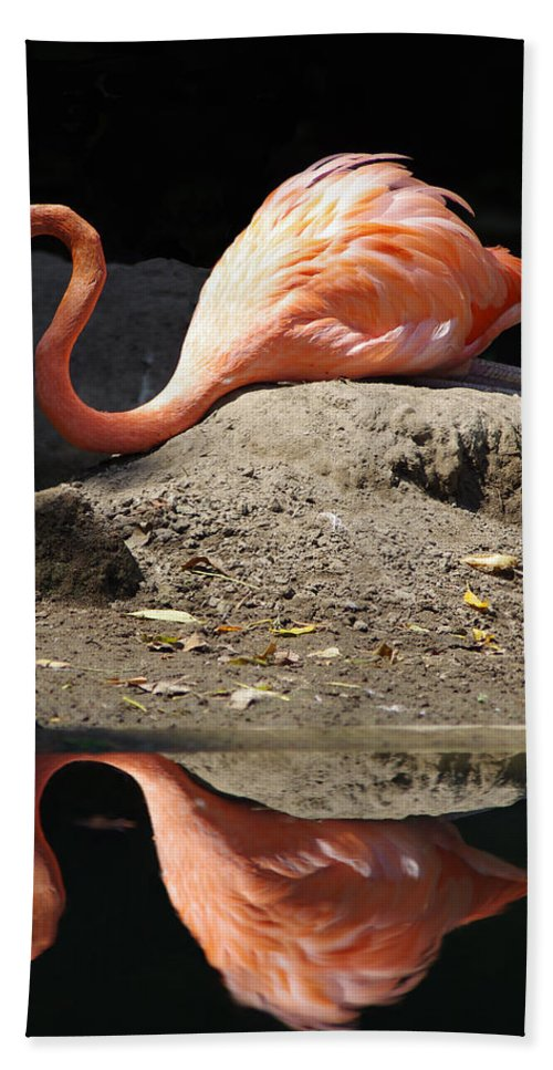Flamingo Beach Towel featuring the photograph Reflections Of A Flamingo by Jenny Gandert