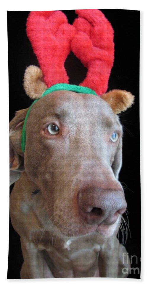 Reindeer Beach Towel featuring the photograph Reindeer Doggie by Art Dingo