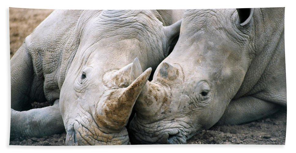 Rhino Beach Towel featuring the photograph Rhino Love by CJ Clark
