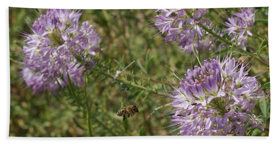 Flowers Beach Towel featuring the photograph Rocky Mountain Bee Plant by Ernie Echols