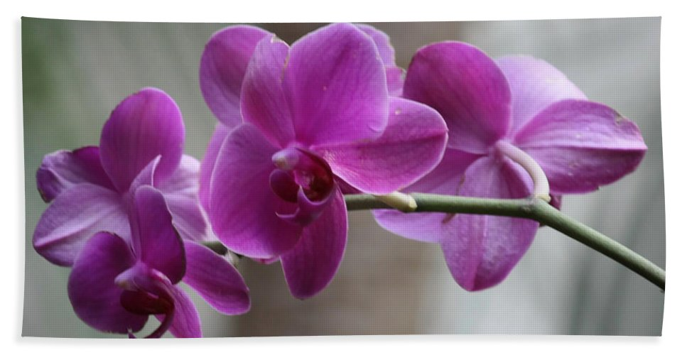 Purple Orchids Beach Towel featuring the photograph Romantic Purple Orchids by Carol Groenen