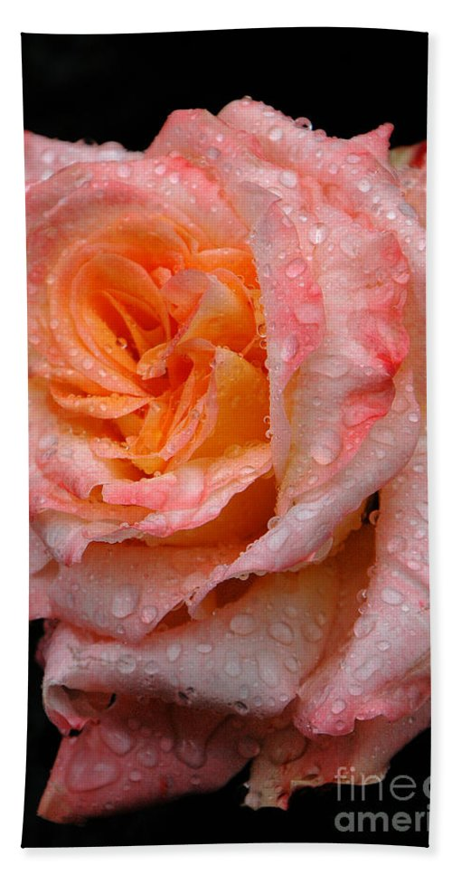 Rose Beach Towel featuring the photograph Rose And Raindrops On Black by Mike Nellums