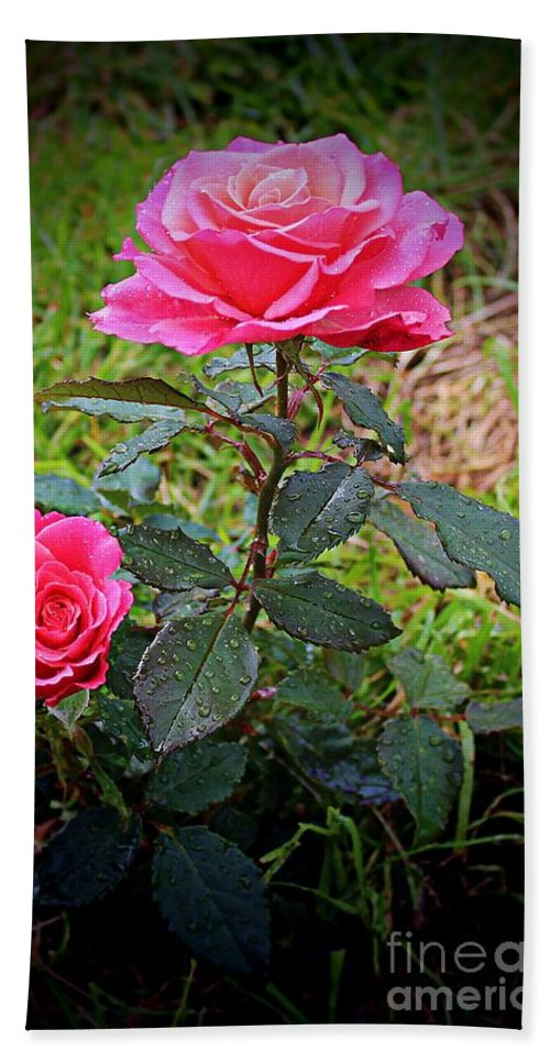 Rose Vignette Beach Towel featuring the photograph Rose Vignette by Barbara Griffin