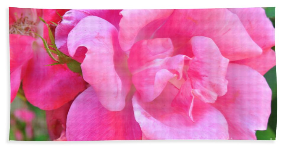 Roses Beach Towel featuring the photograph Roses Perfectly Pink by Regina Geoghan