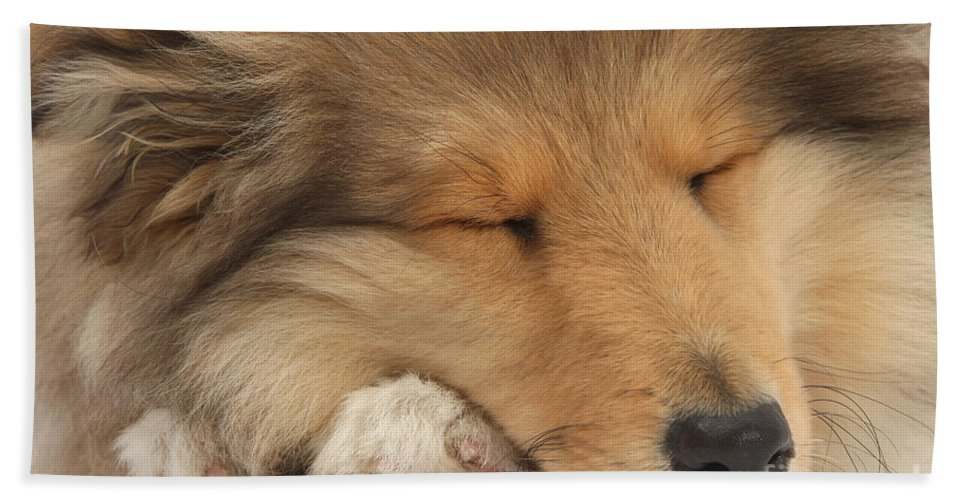 Dog Beach Towel featuring the photograph Rough Collie Pup by Mark Taylor