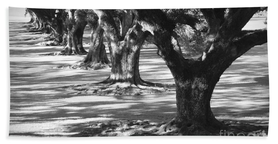 Oaks Beach Towel featuring the photograph Row Of Oaks - Black And White by Carol Groenen