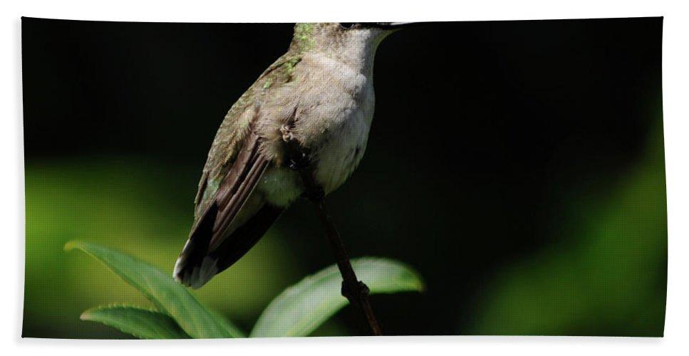 Green Beach Towel featuring the photograph Ruby-throated Hummingbird Female by Ronald Grogan