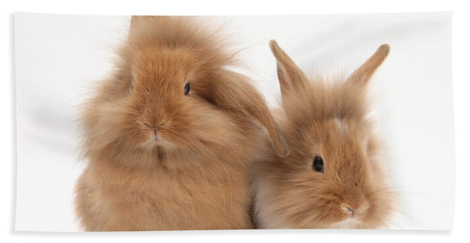 Animal Beach Towel featuring the photograph Sandy Lionhead Rabbits by Mark Taylor