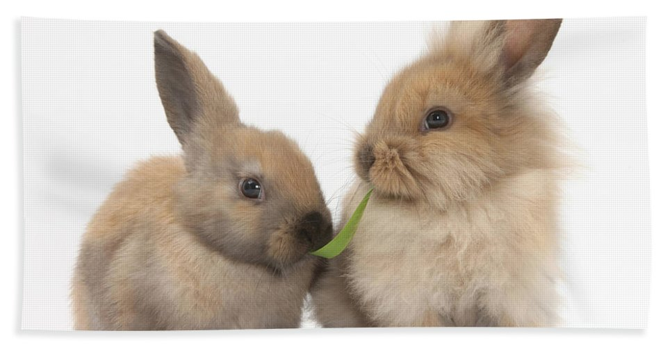 Animal Beach Towel featuring the photograph Sandy Rabbits Sharing Grass by Mark Taylor