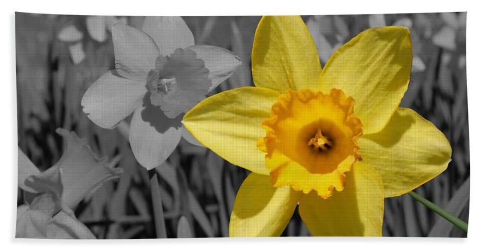 Daffodil Beach Towel featuring the photograph Say Cheese by Betty Northcutt