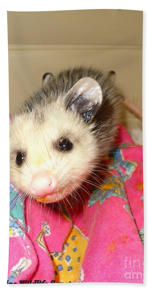 Opossum Photographs Beach Towel featuring the photograph Say Cheese by Art Dingo