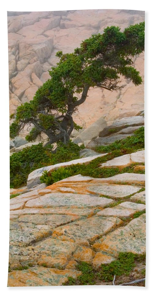 Pitch Pine Beach Towel featuring the photograph Schoodic Cliffs by Brent L Ander