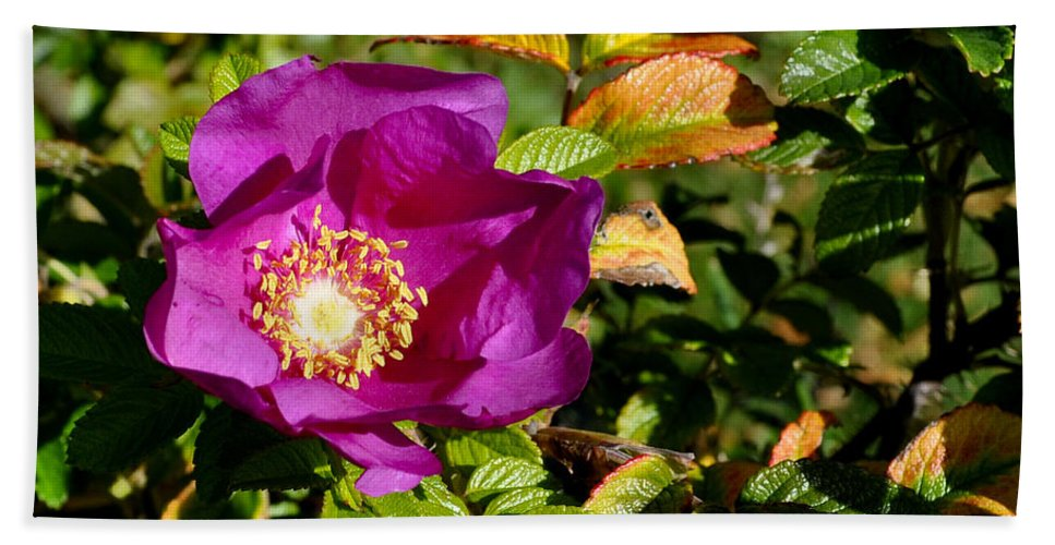 Sea Rose Beach Towel featuring the photograph Sea Rose Srp by Jim Brage