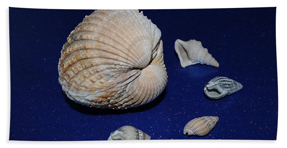 Sea Shells Beach Towel featuring the photograph Sea Shells by Chris Day