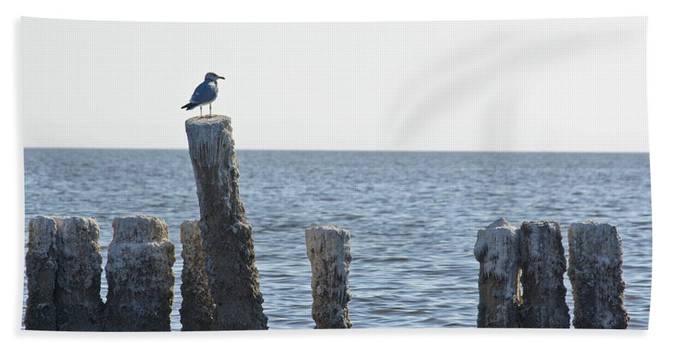 Seagull Beach Towel featuring the photograph Seagull On A Post by Linda Dunn