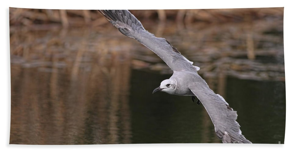 Seagull Beach Towel featuring the photograph Seagull Seagull On The Move by Deborah Benoit