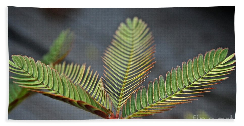 Outdoors Beach Towel featuring the photograph Sensitive by Susan Herber