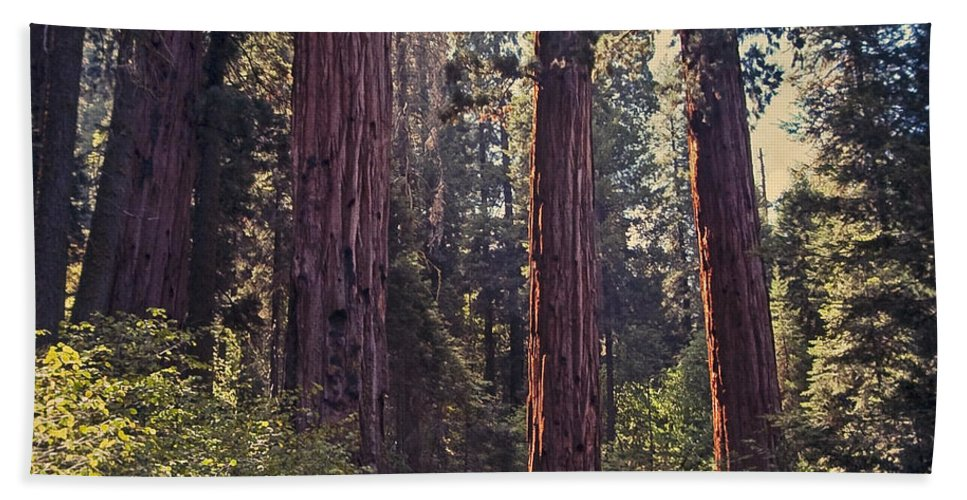 Mountains Beach Towel featuring the photograph Sequoia National Park by Stephen Whalen