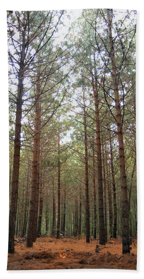 Pine Beach Towel featuring the photograph Serene Forest by Tracey Beer
