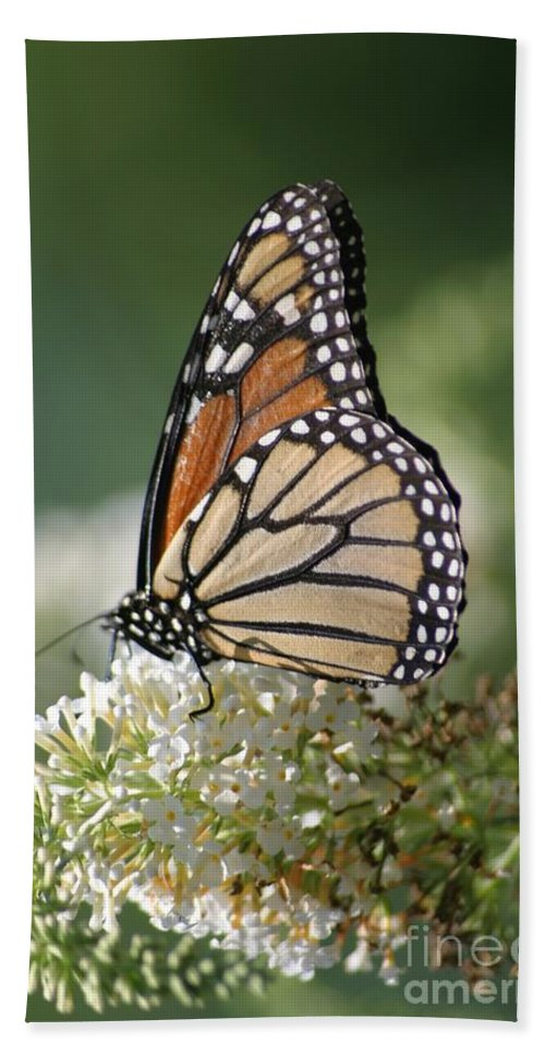 Butterfly Beach Towel featuring the photograph Side Profile Of A Monarch by Living Color Photography Lorraine Lynch