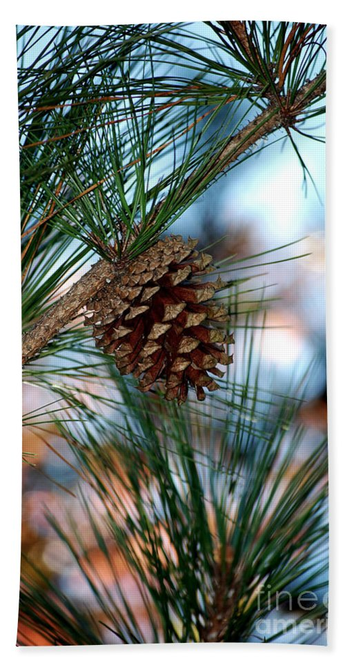 Pine Cone Beach Towel featuring the photograph Signs Of Fall by Robert Meanor