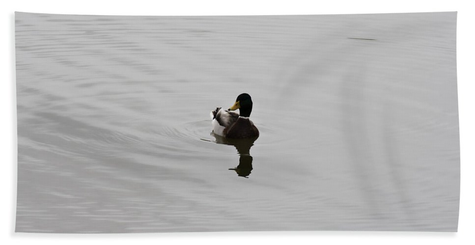 Duck On Lake Beach Towel featuring the photograph Silent Waters by Douglas Barnard