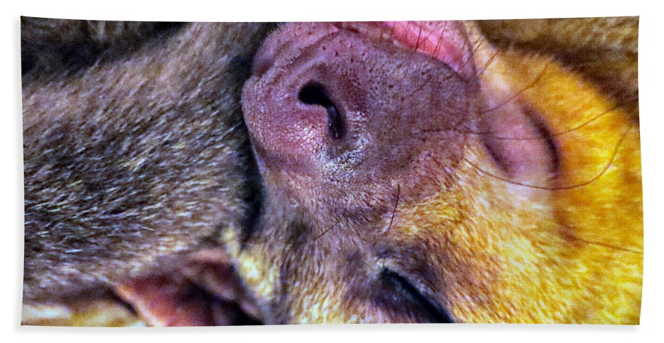 Kinkajou Beach Towel featuring the photograph Silly Sleep by Art Dingo