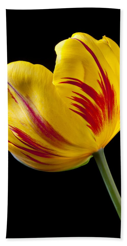 Single Beach Towel featuring the photograph Single Yellow And Red Tulip by Garry Gay
