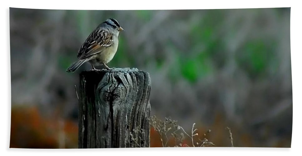 Bird Beach Towel featuring the photograph Sitting On The Fence by Donna Blackhall