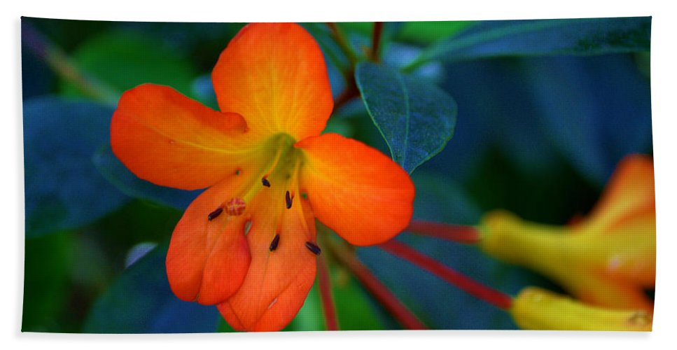 Plant Beach Towel featuring the photograph Small Orange Flower by Tikvah's Hope