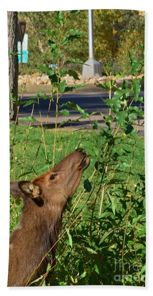 Elk Beach Towel featuring the photograph Snack Time by Kathleen Struckle