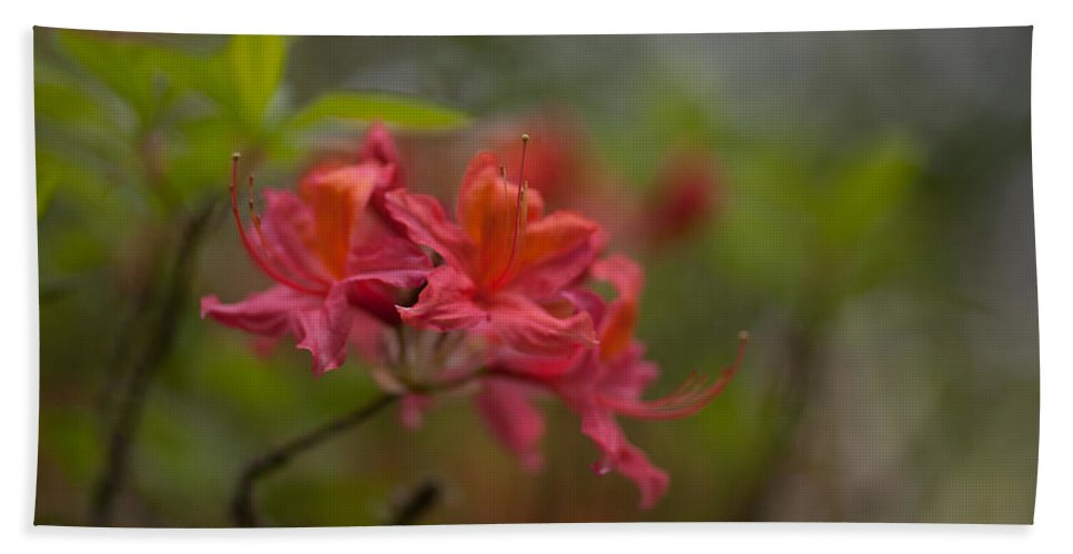 Rhodies Beach Towel featuring the photograph Soft Red Rhodies by Mike Reid