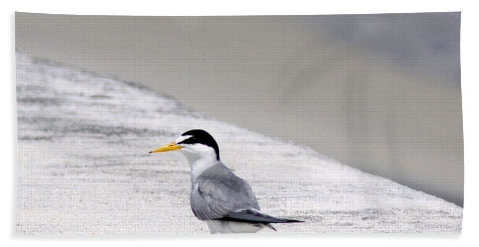 Gulls Beach Towel featuring the photograph Solo by Travis Truelove