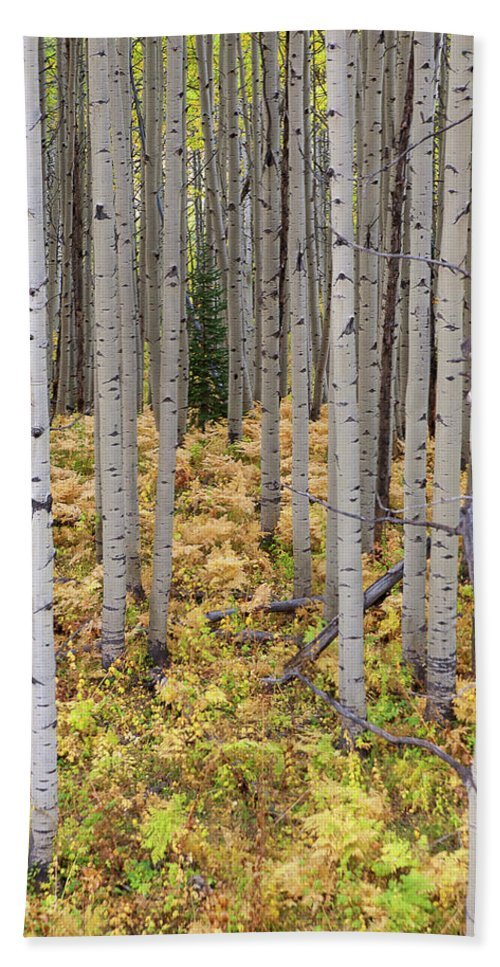 Autumn Colors Photograph Beach Towel featuring the photograph Something Different by Jim Garrison
