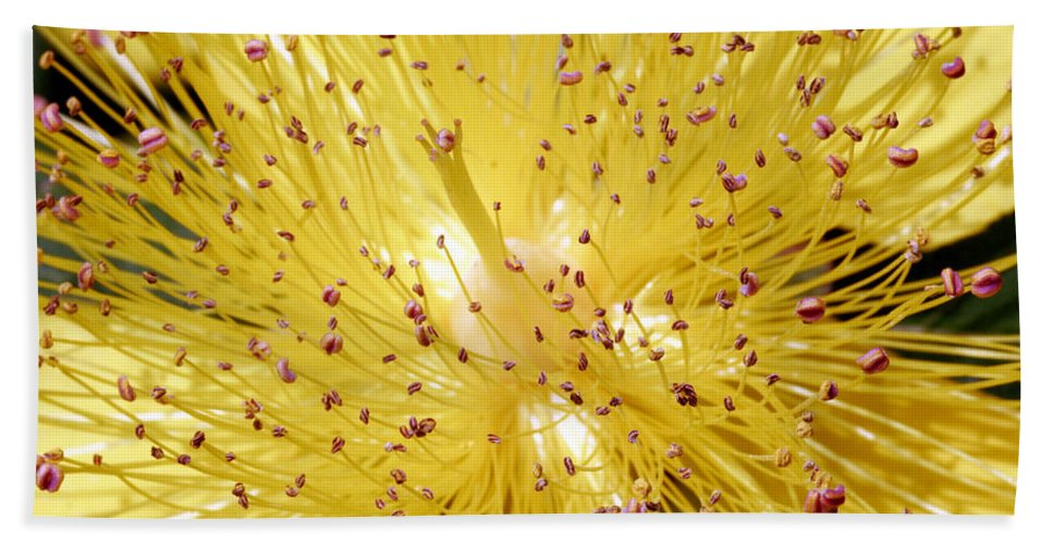 Flowers Beach Towel featuring the photograph Sons Of Light by Munir Alawi