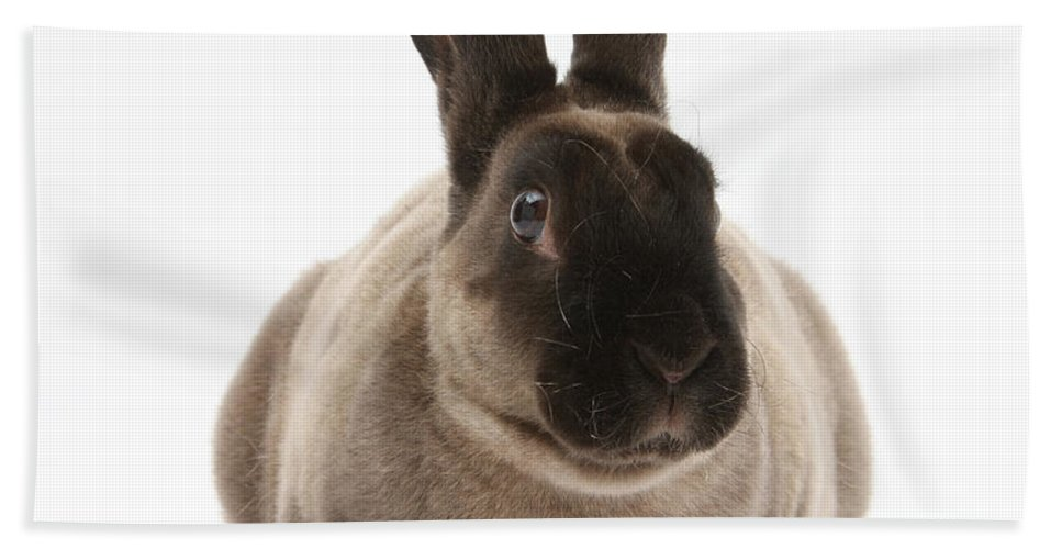 Nature Beach Towel featuring the photograph Sooty Rex Rabbit by Mark Taylor