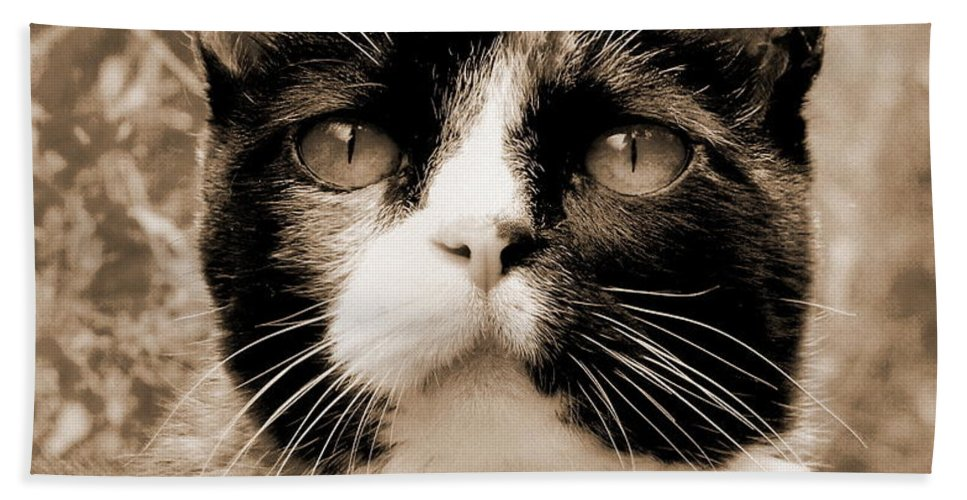 Cat Beach Towel featuring the photograph Souls Great And Small 2 by Rory Sagner