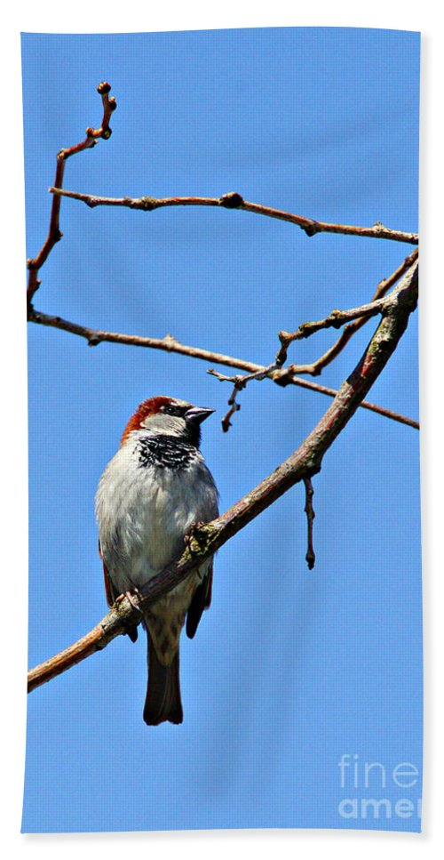 Birds Beach Towel featuring the photograph Sparrow On The Branch by Randy Harris